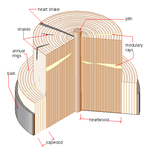 Wood Section